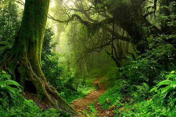 Way in the tropical jungle near the Annapurna nepal